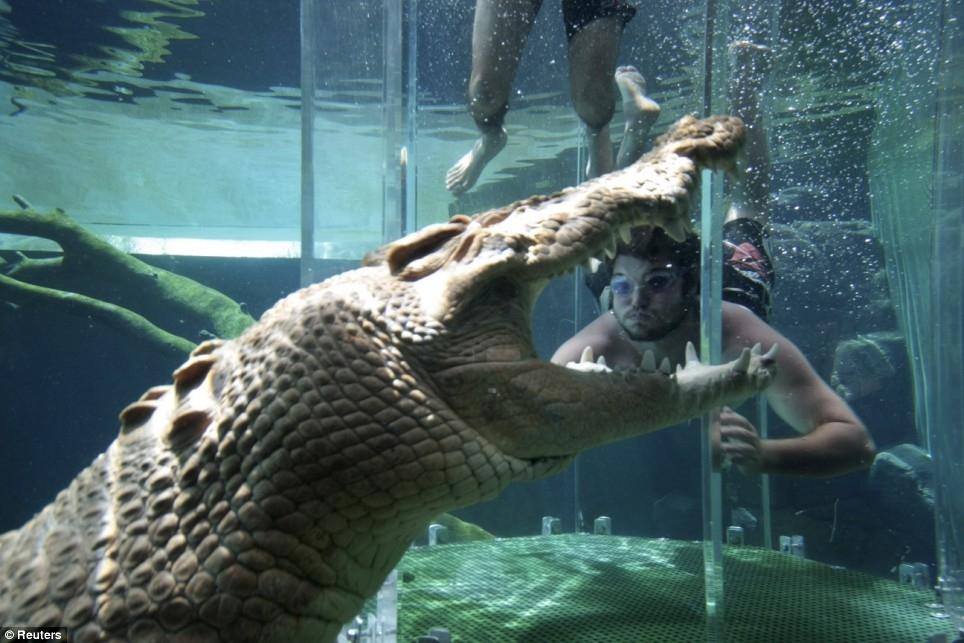 Парк Crocosaurus Cove